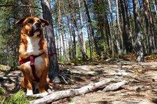 Hunde Haustier -> Hund im Wald 2011