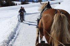 Pferde Reiten -> Pferdekutschte Schlitten im Winter 2011
