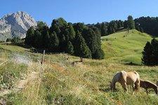 Pferde & Reiten -> Fohlen auf Wiese 2011
