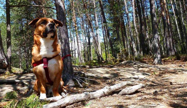 Hund & Haustier, Foto: AT, © Peer